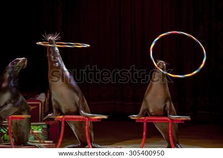 circus seal while playing on...