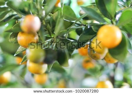Citrus Citrus Citrus #1020087280
