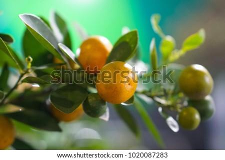 Citrus Citrus Citrus #1020087283