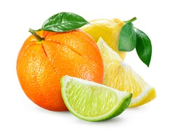 Citrus Fruit. Composition with leaves isolated on white background. Orange, lemon, lime.