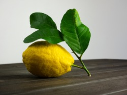 Citrus medica. Citron fruit with leaves on table. Still life.