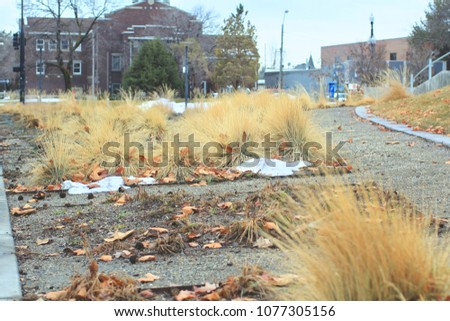 City: Abandoned City in United States, High Grass, Leaves Everywhere During Daytime, Around The End of Winter. #1077305156