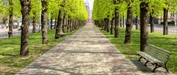 city alley in Riga. Latvia.Spring. green trees.