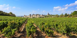 City of Carcassonne seen from the vineyard / France
