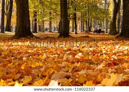 City park in autumn #116022337