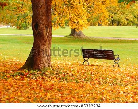 City park in autumn #85312234