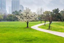 city park in the spring , green lawn field and  curved walk path