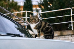 city street cat sitting on the hood of an old car