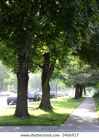 city street landscaped with trees and grass