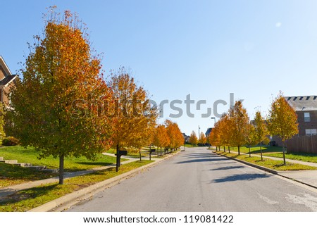 City street with autumn trees.