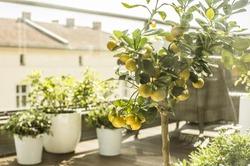 City terrace in spring, balcony plants