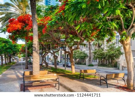 Cityscape of  Rothschild boulevard  in Tel Aviv, Israel. Foto stock ©
