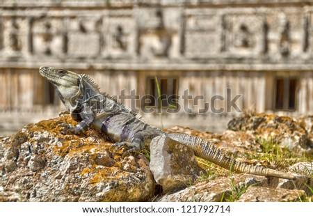 Ciudad Prehispanica de Uxmal