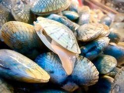 Clams. Opened shellfish. Fresh shellfishes.