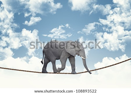 classic african elephant on rope