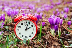 Classic alarm clock over spring flowers background. Daylight saving time reminder. Spring natural background with first flowers. Blooming crocus flowers. Spring time change background.