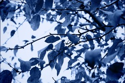 Classic blue background. Color of the year 2020. Blurred natural, floral background