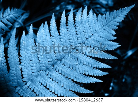 Classic blue ferns in the forest. Color of the year 2020 classic blue. Main color trend concept. Leaves texture, natural background.
