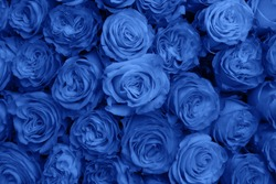Classic Blue Flowers As Fashion Background For Trendy Flowery Theme. Background Of Advertising Natural Cosmetics For 2020 Year, 19-4052.