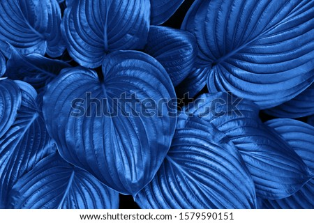 Classic Blue Pantone color Leafs in garden background.