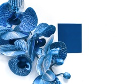 classic blue 2020 pantone orchid flower on white background. color of the year.