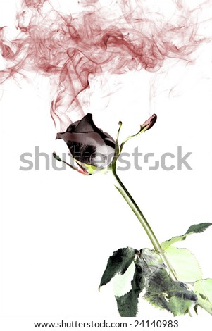 classic red rose with smoke on black background