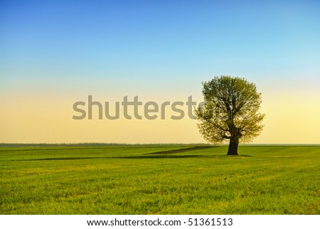 classic rural landscape with lonely tree in sunset light