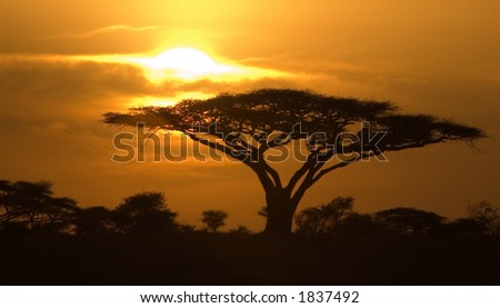 Classic Sunrise in Serengeti National Park