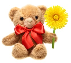 Classic teddy bear with red bow and flower isolated on white background.