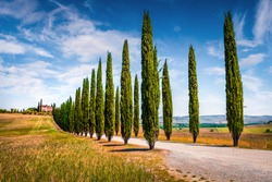 Classic Tuscan view with farmhouse and cypress trees. Colorful summer view of Italian countryside, Beauty of countryside concept background.