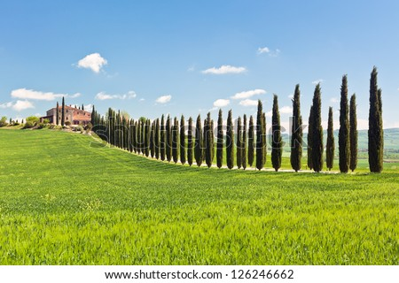 Classic view of Tuscan farmhouse, green field and cypress tree rows. Spring, blue sky