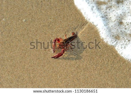 clawed lobster alive on a beach #1130186651