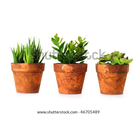 Clay pots with herbs on white background