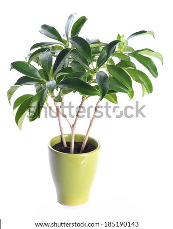 Clean and beautiful potted plants in the office  #185190143