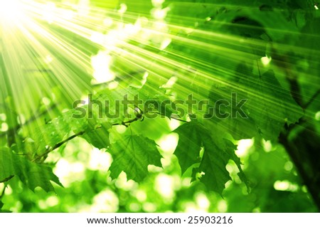 clean green leaves, shallow focus - stock photo