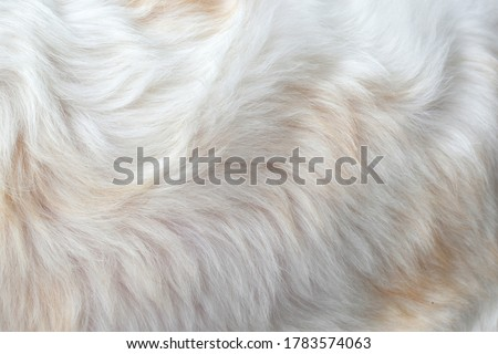 Photo of  Clean white fur texture using abstract background wallpaper design