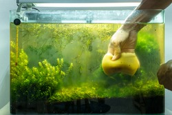 Cleaning aquascape tank nature style. Cleaning plant under water in tank glass.