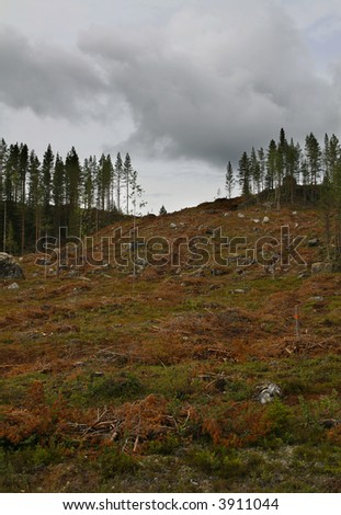 clear-cut area of forest in northern sweden