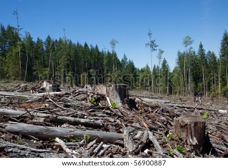 Clear cut in British Columbia.