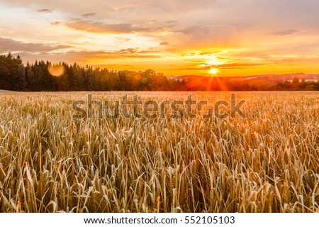 Clear field in the sunset. Fall in Czech Republic.