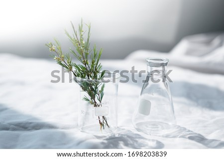clear glass beaker and flask with herbal plant on white fabric with window natural light for cosmetic science research background