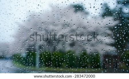 Clear glass window with water drop in rainy day. Outside is blurred background of the beautiful cherry blossom trees along the road.