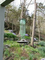 Clear hummingbird feeder with a garden and forest in the background