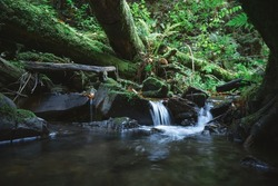 Clear mountain stream in the lush forest. Wilderness scene with pure water, trees roots, lush moss and fern leaves . Nature backgtround