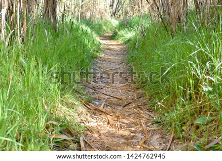 clear path in the forest through dry hurdles. the way is covered with dry leaves and at both sides there is green grass. The sun rays enter through vegetation lighting the vegetation. Horizontal photo