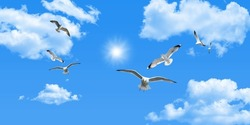 Clear sunny sky, white clouds and flying seagull birds