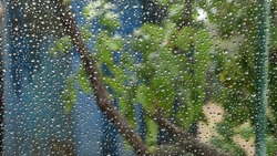 Clear water drops shot from behind transparent glass window with blurred background of tree foliage outdoor. Dot pattern of circle raindrops look like beads