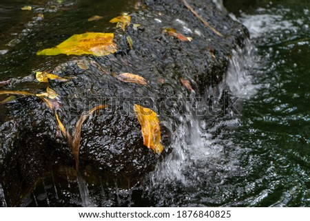 Clear water flowing through the rock weir.Crystal waters with reflection,leaves at small waterfall in the garden.