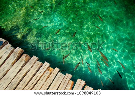 Clear water in Plitvice lakes- fishes and boat. There is wooden bridge from planks.