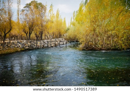 Clear water of creek gently flowing through colorful foliage grove in autumn season, Landscape serene scenery in Skardu. Gilgit Baltistan, Pakistan. #1490517389